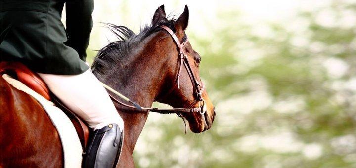 Прогулка на лошадях или абонемент на занятия по верховой езде в частной конюшне «Идиллия»