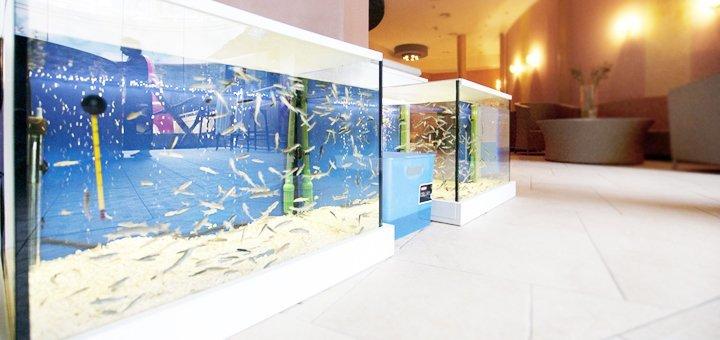 SPA-день в аквапарке «Dream Island»: безлимит в аква- и релакс-зонах и SPA-программа на выбор