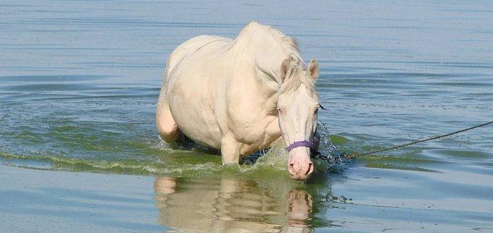 Скидка до 57% на прогулки на лошадях или занятия по обучению верховой езде в конюшне «Идиллия»