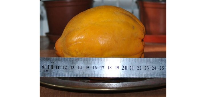 Скидка 50% на саженцы папайи и маракуйи