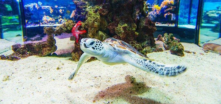 Скидка 50% на посещение океанариума в дельфинарии «Немо»